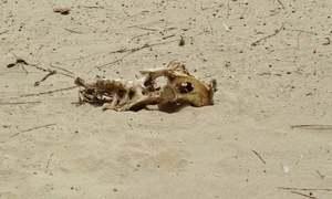 Sindh cabinet declares Thar drought-hit; orders desalination plant for Karachi