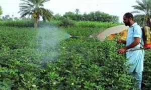 Punjab exceeds cotton sowing target