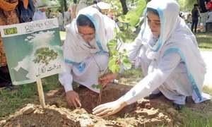 درخت لگائیے لیکن یہ بھی سوچیے کہ یہ بحران پیدا کیسے ہوا؟