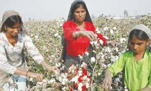 Growers demand Rs10bn bailout