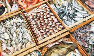 Pakistan is missing the boat on seafood exports