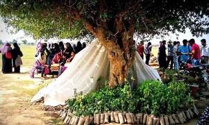 10 ارب درختوں کا حساب کتاب: حقیقی اور غیر حقیقی خیالات کا جائزہ