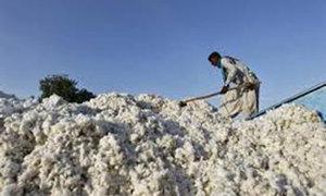 Cotton prices fall