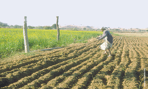Water scarcity to hit Rabi crops next