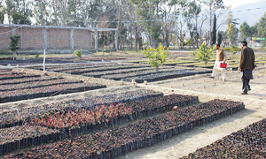 Billion tree tsunami nursery set on fire in KP's Lakki Marwat district
