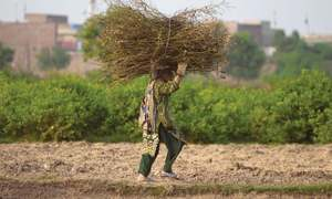 Punjab: upsetting the apple cart