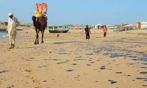 Mubarak Village oil spill affects fishermen's livelihood, govt fails to start cleanup operation