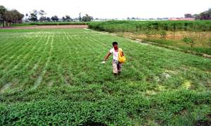 Govt needs to import 0.1m tonnes of urea to avoid shortage