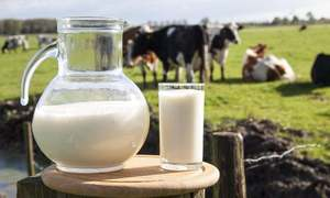 7 ways Dayfresh keeps its 'real promise of real milk'