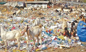 Cabinet approves phase-wise ban on plastic bags across Sindh