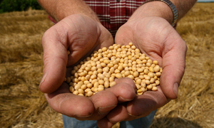 PSC ranked 22nd on Access to Seeds Index