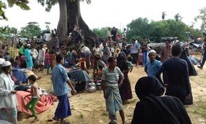 UN urges BD to halt Rohingya return