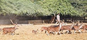 Overcrowding, inbreeding pose threat to Safari animals