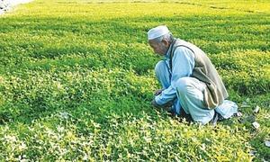 Farmers criticise PTI for broken promises