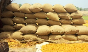 ACE recommends registration of FIRs against food dept officials over gunny bag scam