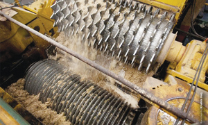 Sugarcane crushing begins after a month's delay