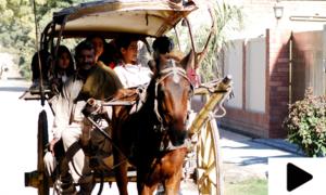 ملتان میں تانگے کی سواری کی دم توڑتی روایت