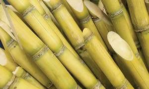 Agriculture: Sugar cane crisis on repeat