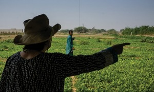 Why organic farming is an uphill task in Pakistan