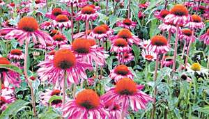 GARDENING: 'HOW CAN I GET RID OF WEEDS?'