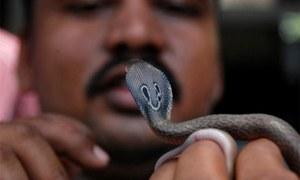 سانپ نے شوہر کو ڈسا، شوہر نے ساتھ مرنے کیلئے بیوی کو کاٹ لیا