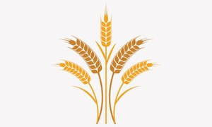 No target for wheat procurement