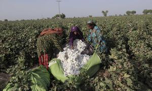 Cotton production falls 7pc