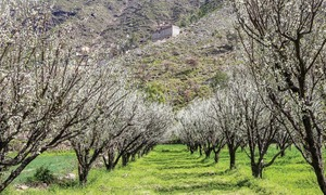 Swat bathes in colours of spring