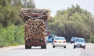 Transportation of illegal timber not allowed despite end to ban, KP Assembly told