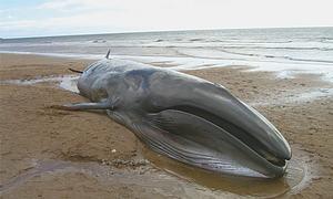 Whale found washed ashore on Gwadar beach