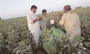 Bio-pesticide import to help cotton farmers