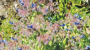 GARDENING: SUMMER FLOWER QUILTS