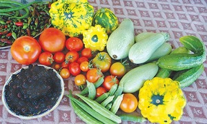 GARDENING: 'HOW CAN I WEED MY VEGETABLE GARDEN?'