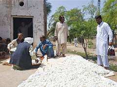 Farmers demand measures to promote sericulture industry