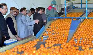 Fruit and vegetable exports need attention