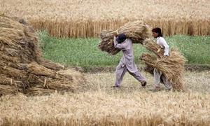 Balochistan seed project faces obstacles