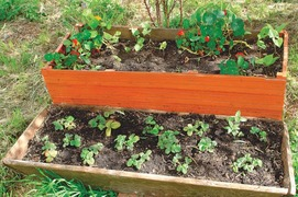 GARDENING: 'CAN BLUEBERRIES GROW IN HARIPUR?'