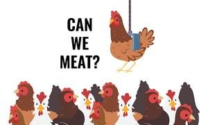 مرغی اچھی ہے یا بُری؟