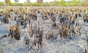 Weeds, trees gutted in forest fire