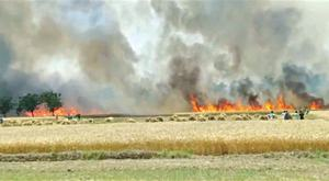 Wheat on 748 acres burnt in 51 incidents in two weeks