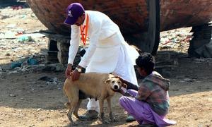 سگ گزیدگی روکنا آسان لیکن اختتام خوفناک - یہ حکومتی ریڈار پر کیوں نہیں؟