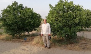 A farmer in Punjab is rejuvenating sand dunes though drip irrigation