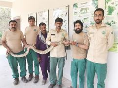 Indian rock python confiscated from snake charmer