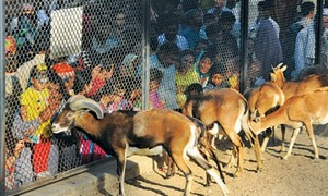 Zoo witnesses rush of visitors despite high temperatures