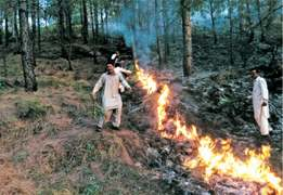 Fires in Murree forests under control