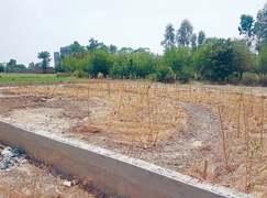 Guru Nanak forest with Miyawaki method set up in Kasur