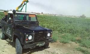 Fear grips farmers as locusts advance towards cotton crop