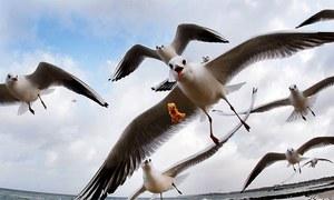 جب 2 پرندوں نے ایک جوڑے کو 6 دن کیلئے یرغمال بنالیا