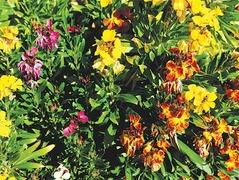 GARDENING: GREEN ALTERNATIVES TO GRASS LAWNS
