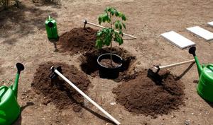 بھارتی گٹکا فروخت کرنے کے جرم میں 10 پودے لگانے کی انوکھی سزا